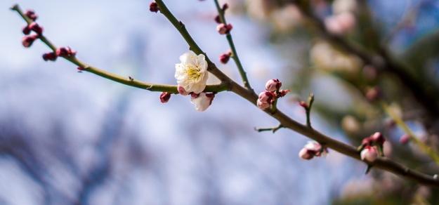 floraison (1)
