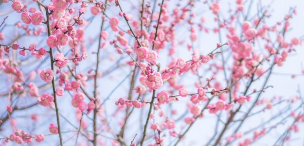 floraison (2)