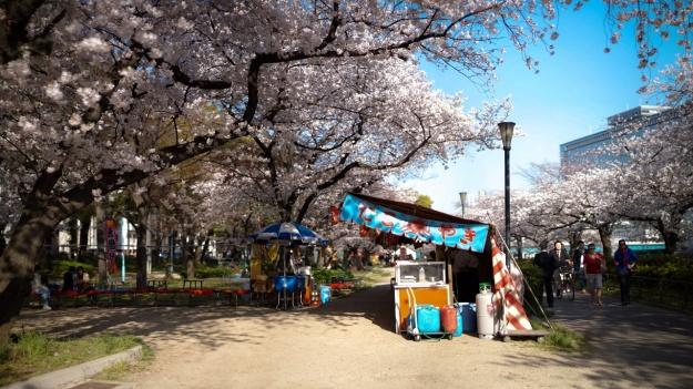 Floraison sakura Japon