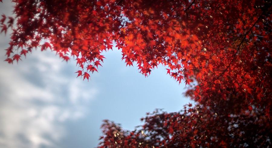 automne japonais