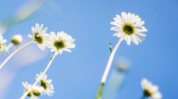 printemps japon fleur