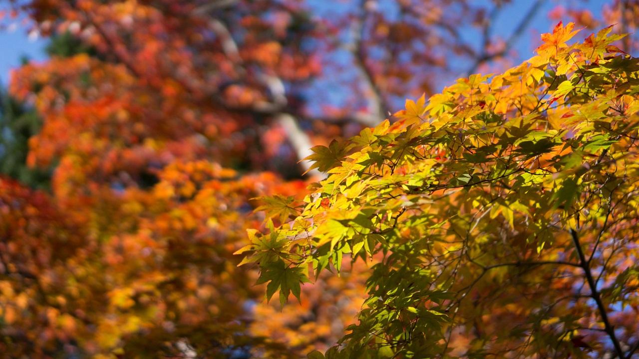 automne 2