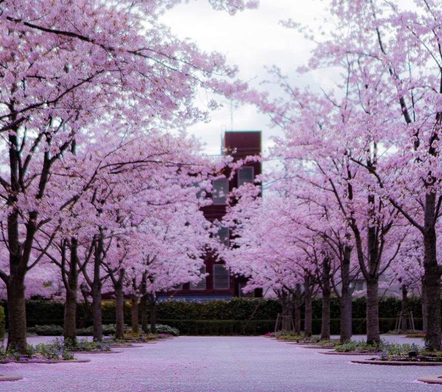 Sakura, Osaka, Japon