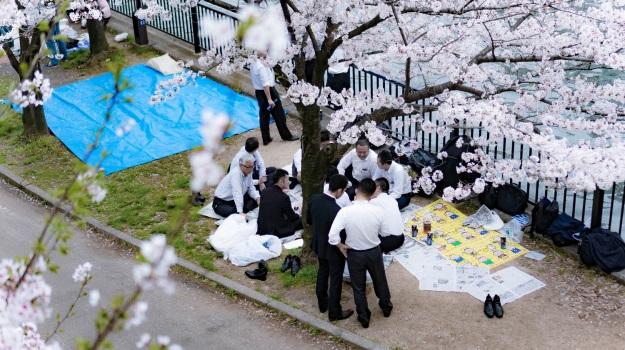 Japon osaka cerisiers