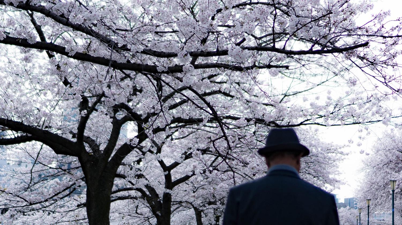 Osaka Japon sakura cerisiers