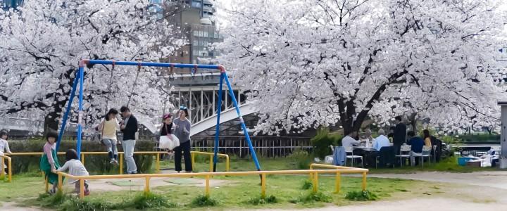 Osaka au printemps, les cerisiers fleurissent