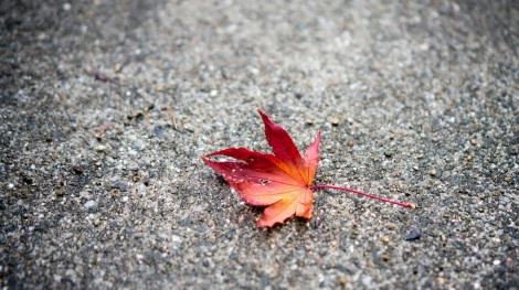 automne japon