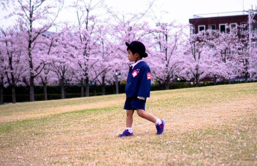 Osaka cerisiers Japon